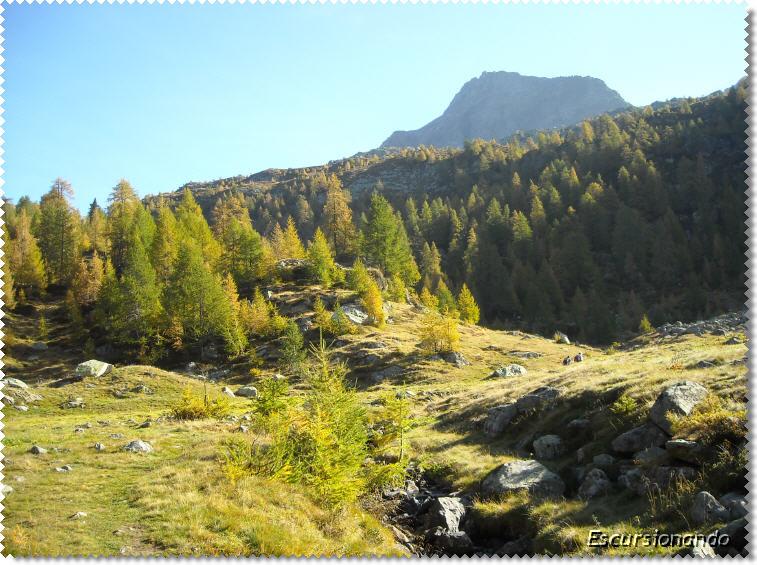 Lago mognola for Le pigne dei larici